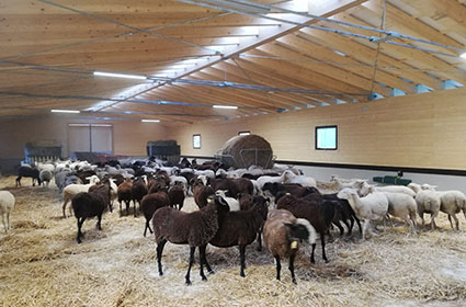 SHEEP STABLE in Central Italy/Amatrice